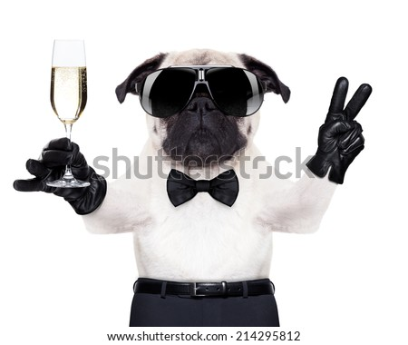 pug with a  champagne glass and victory or peace fingers toasting for new year , looking so cool - stock photo