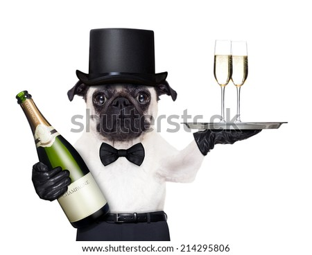 pug with   champagne glasses on a service tray  and a bottle on the other side - stock photo
