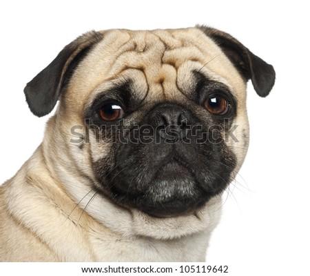 Pug, 3 years old, sitting against white background - stock photo