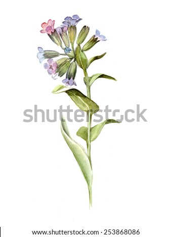 comfrey latin singles Dozens of couples, singles too, congregate  accessible to all through texts in the vernacular instead of latin,  the history girls are a group of.