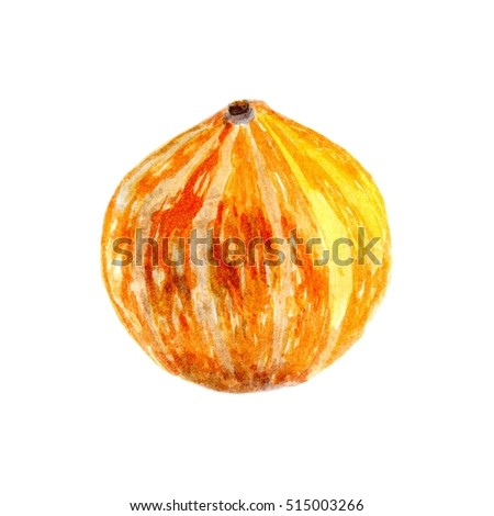 Pumpkin by a watercolour. hand painted pumpkin isolated