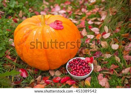 pumpkin, cranberry, backyard garden - stock photo