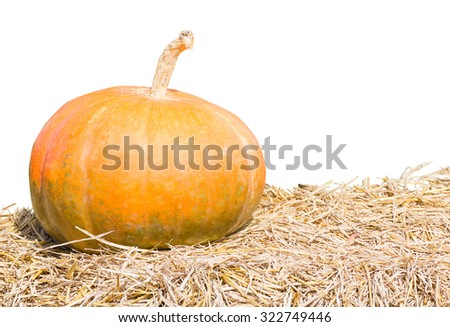 Pumpkin farm production in rural areas, the harvest season agent white background - stock photo