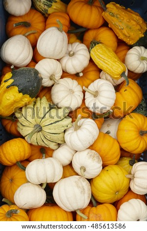 Pumpkin for sale