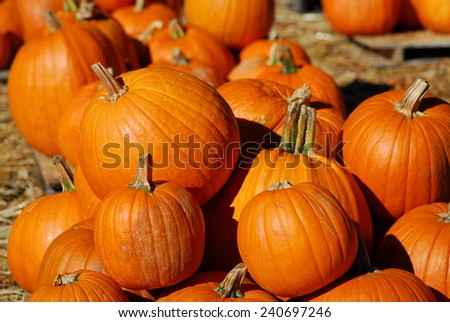 pumpkin fruit for cooking and halloween decoration