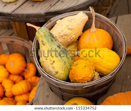 Pumpkin gourds - stock photo