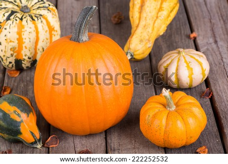 Pumpkin, gourds and squash on a wood floor