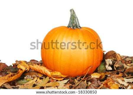 Pumpkin on Autumn leaves against white background