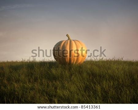 pumpkin on lawn - stock photo