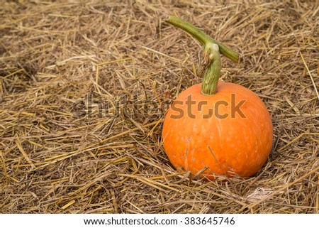 Pumpkin on the straw in the background.