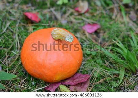 Pumpkin outdoor