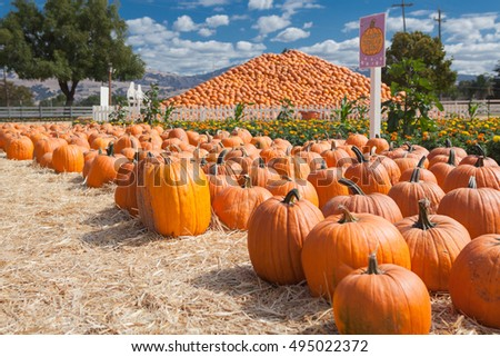 Pumpkin patch farm with pyramid made of pumpkins as background