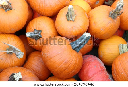 pumpkin patch for Autumn season at market place