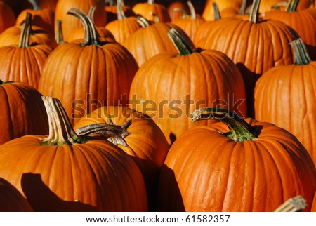 Pumpkin Patch in Autumn - stock photo