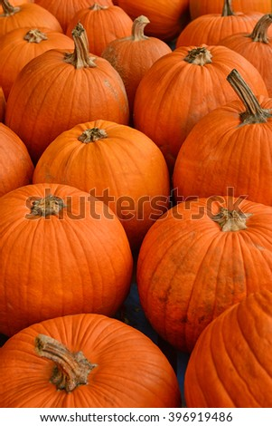 pumpkin patch in the autumn before halloween - stock photo