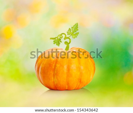 Pumpkin vegetable against blurred colorful background. - stock photo