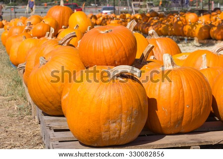 pumpkin with curved stem - stock photo