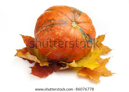 Pumpkin with fall leaves on white background - stock photo