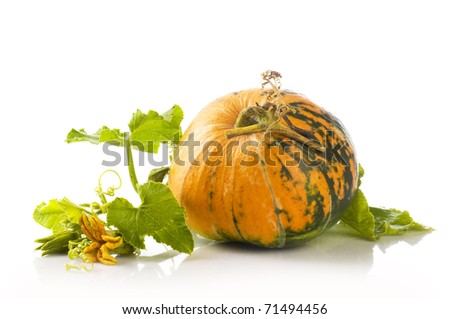 pumpkin with flower and green leaf on white - stock photo