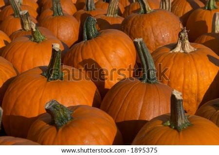pumpkins. - stock photo