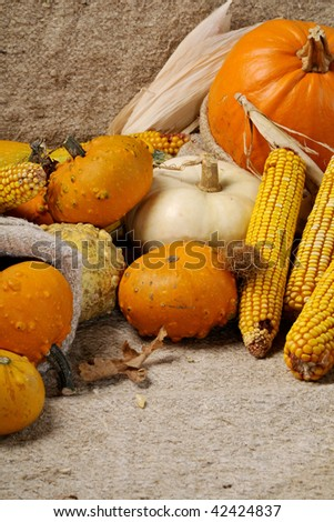 pumpkins and corn isolated