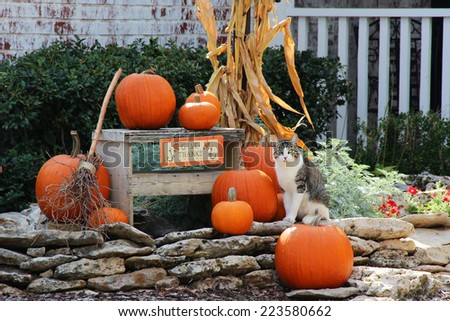 Pumpkins and corn on stones near a stone house - stock photo