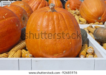 pumpkins and dried corns