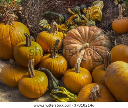 Pumpkins and gourds at a florist's shop. Colorful orange pumpkins with stems in various sizes and autumn flowers displayed on burlap. - stock photo
