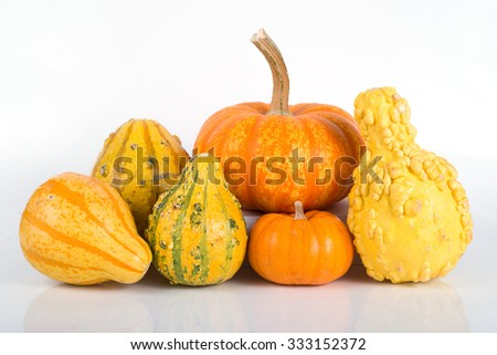 Pumpkins and gourds in various shapes - stock photo