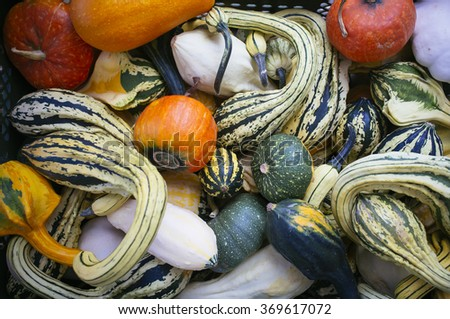 Pumpkins and gourds of different colors and sizes - stock photo