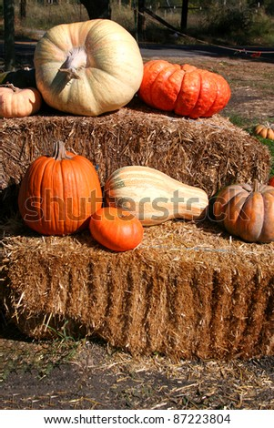 Pumpkins and Gourds on Hay Bales