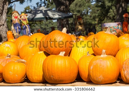 pumpkins and two scarecrows - stock photo