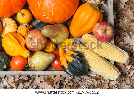 Pumpkins, apples, pears, tomatoes and straw on a wooden plate. - stock photo