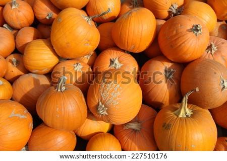 Pumpkins background - stock photo