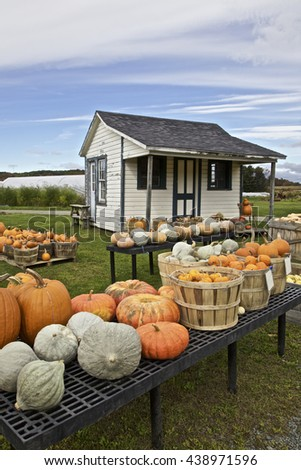 Pumpkins crop for sale at a farm's stall, USA