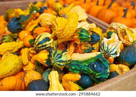 Pumpkins for sale on autumn market - stock photo