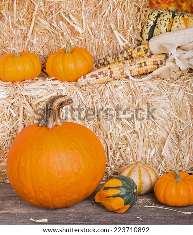 Pumpkins, gourds and corn on and around bales of hay