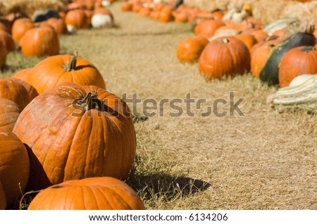 pumpkins, gourds, and vegetables