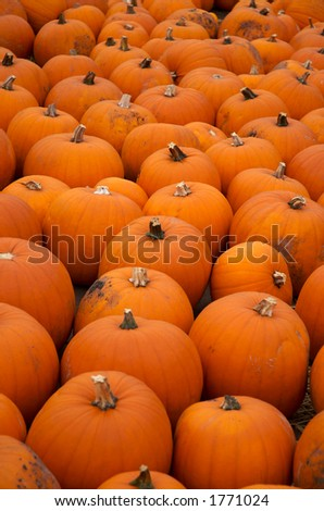 pumpkins in a field - stock photo