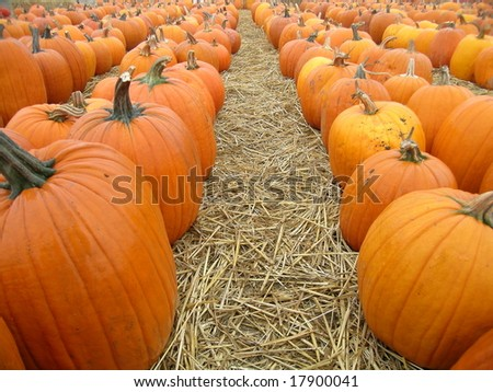 Pumpkins in a Row - stock photo