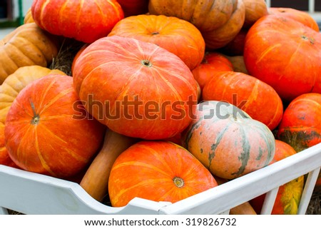 Pumpkins in pumpkin patch waiting to be sold - stock photo