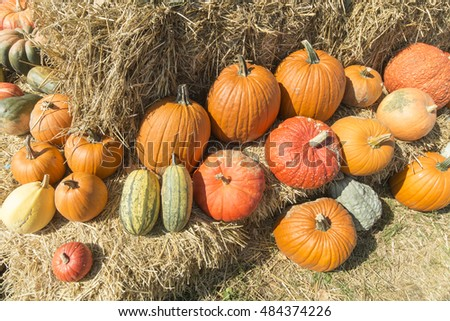 pumpkins on a bale of straw, concept for thanksgiving