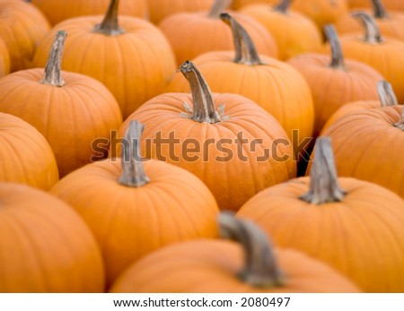 Pumpkins on a flat surface, central one in focus