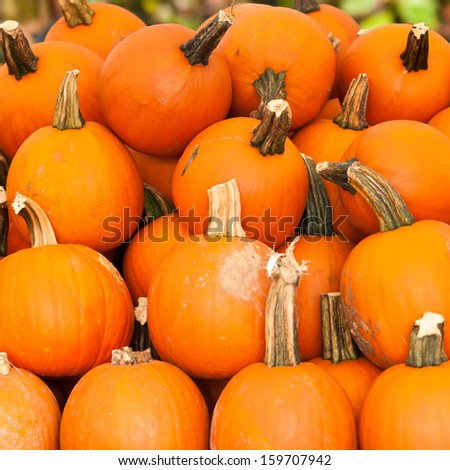 pumpkins on a pumpkin patch