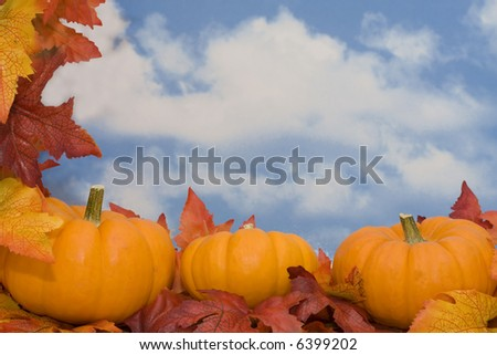 Pumpkins on fall leaves with sky background