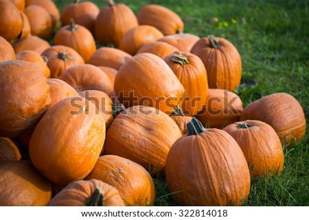 pumpkins on field
