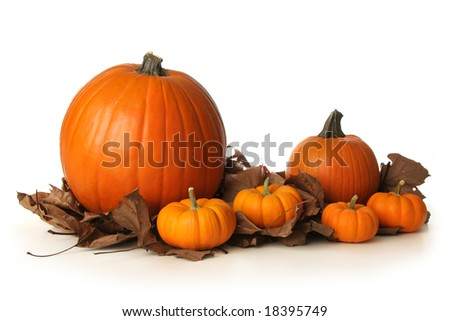 Pumpkins on leaves - stock photo