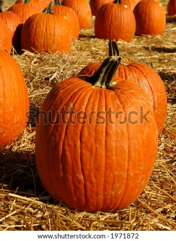 Pumpkins on straw ,ready for sell