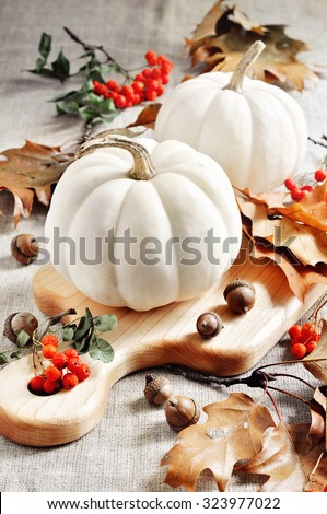 Pumpkins or white gourds, autumn, fall decoration for Thanksgiving or Halloween, selective focus - stock photo