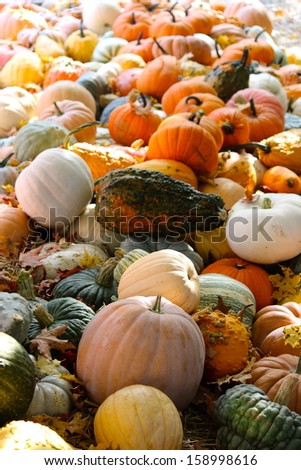 Pumpkins, Squash  & Gourd - stock photo